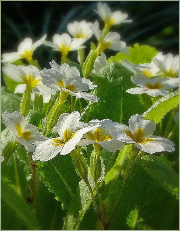 Цветок фей