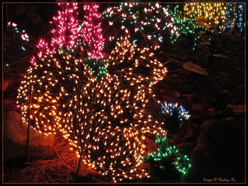Garden d'Lights 2008 - белка