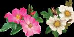 цветочки (7).png