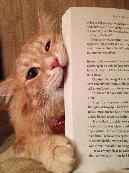коты мешают человеку читать 2
