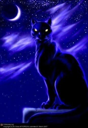 Фамильяр ведьмы и другие давнишние суеверия про черных кошек.  Черные кошки столетьями играли важную роль в фольклоре...