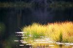 Желтая трава на ламбе