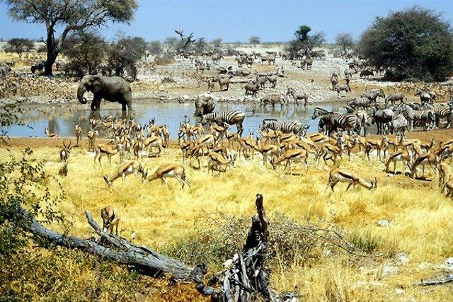 Национальный парк Намибии