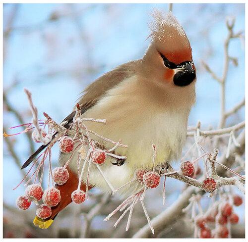 для синиц зимующие птицы подмосковья кормление птиц зимой чем кормить.