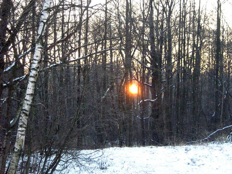 Зимнее солнце, пробирающееся меж деревьев