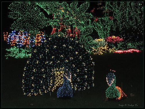Garden d'Lights 2008 - 076