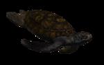 морская черепаха (10).png