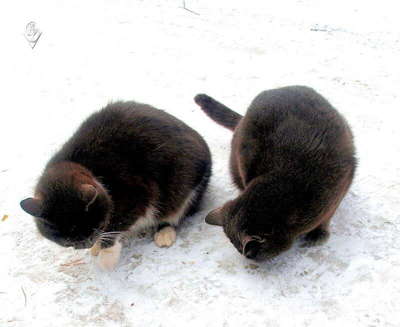 Двое на снегу