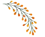 3_Floral (99).png