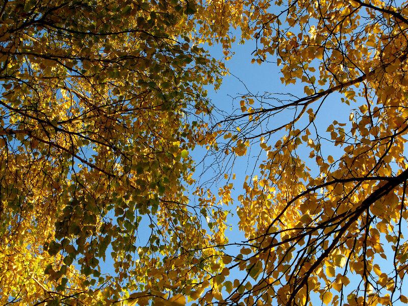Уж небо осенью дышало!