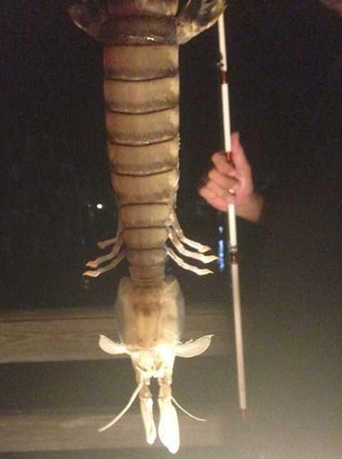 Рыбак из Флориды озадачил всех своим уловом