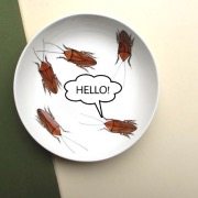 Тараканы