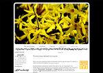 Дизайн для ЖЖ: Желтые цветы (S2). Дизайны для livejournal. Дизайны для Живого журнала. Оформление ЖЖ. Бесплатные стили. Авторские дизайны для ЖЖ