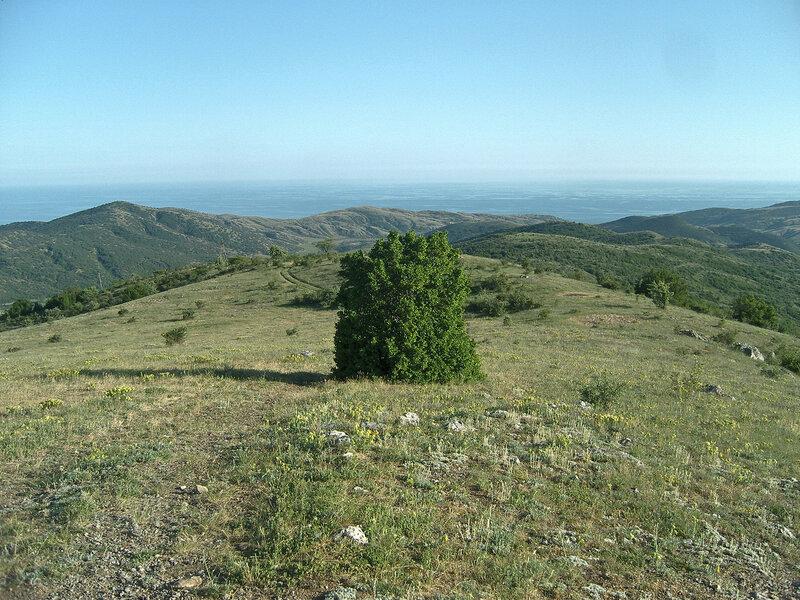 зеленогорье! чистое небо, спокойное море, зеленые холмы и необычный куст