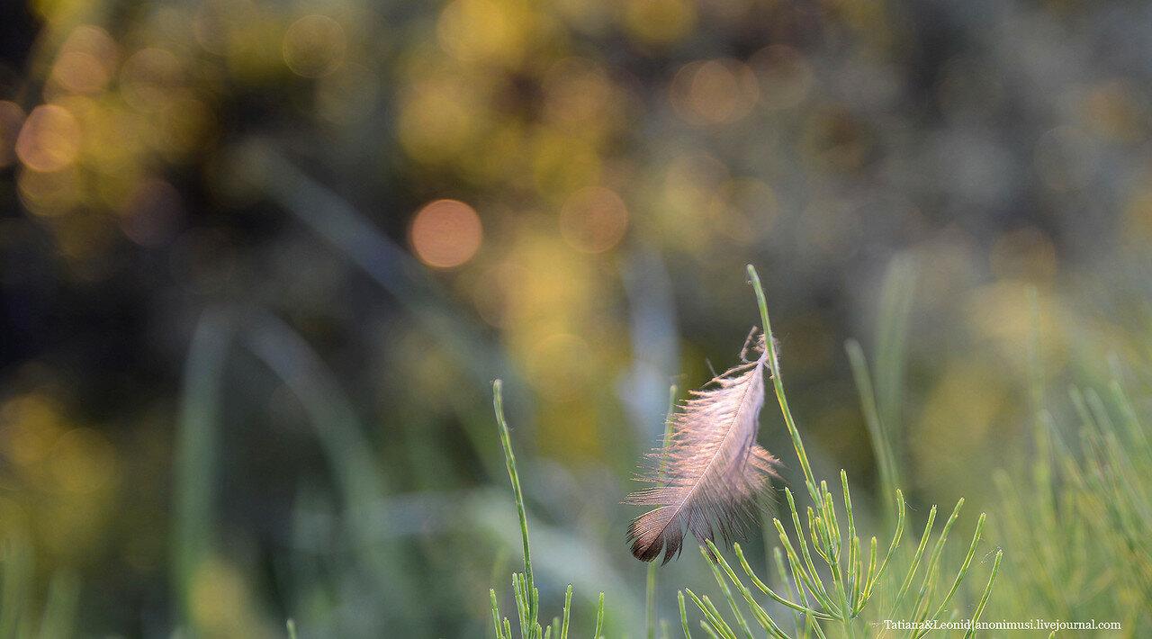 Шведская горка. Гомель Nikon D 7100 и объектив Sigma 17-50mm
