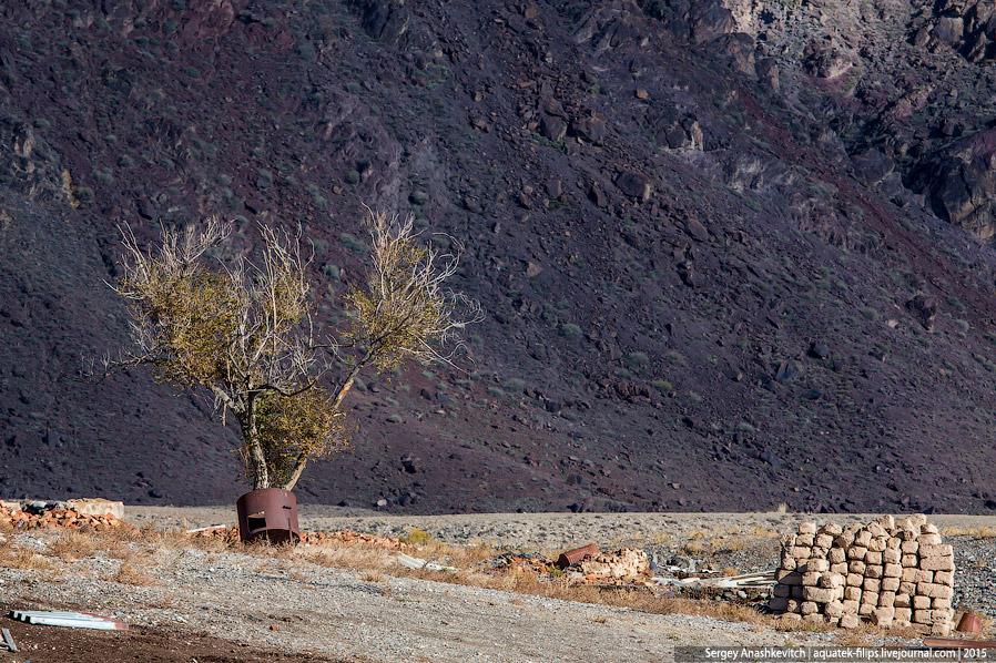 14. Отъехав несколько километром от жилища Дамира, мы увидели в степи отару овец. Кто знает, может э