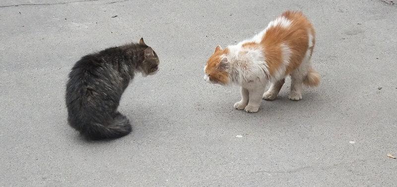 поют коты