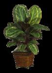 DBK PLANTS 061.png