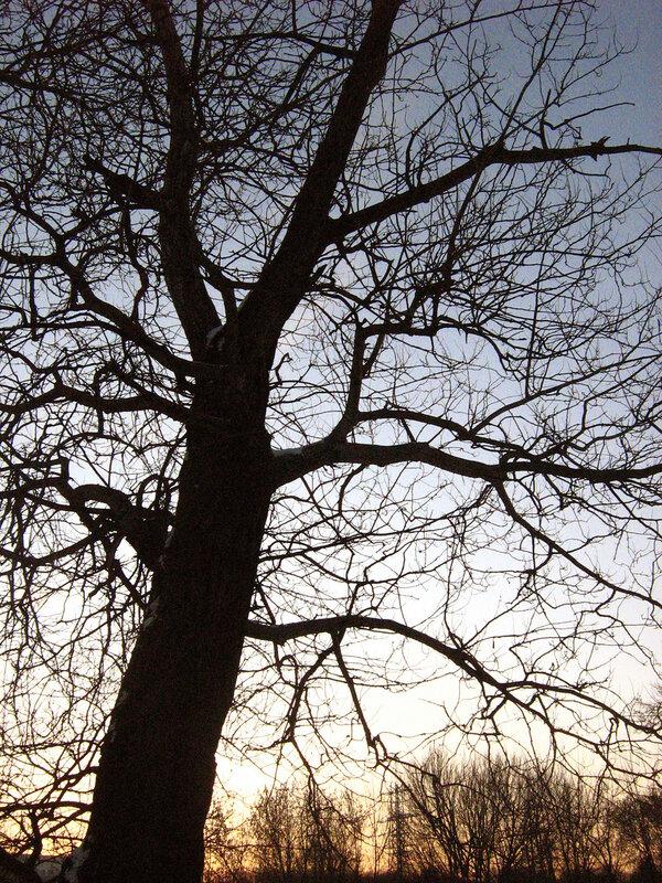 Верхушка, уходящая ветвями в небо:-)