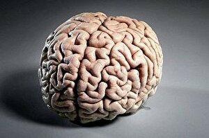 Ученые в лабораторных условиях вырастили человеческий мозг