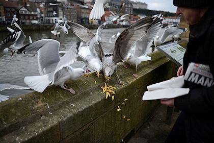 Британские социологи объяснили нелюбовь людей к чайкам