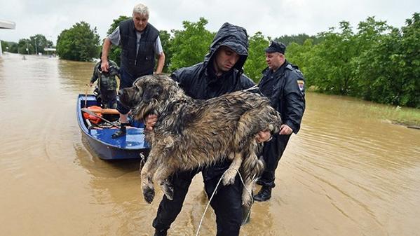 Как люди спасают животных 0 12cfe4 f8c0985f orig