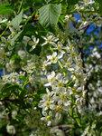 Цветы весна-лето 2015 скачать