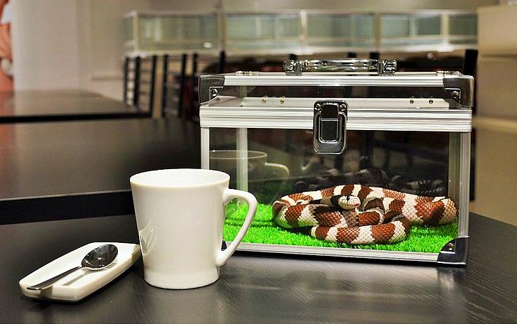 Змеиное кафе в Японии — жуть? Еще какая! (8 фото)