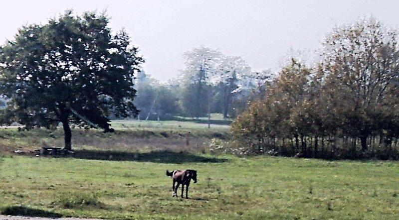 Конь, в поле, у дороги...  12 октября 2008, под Горячим Ключом, на слёте (217).JPG