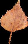 la_leaf 2.png