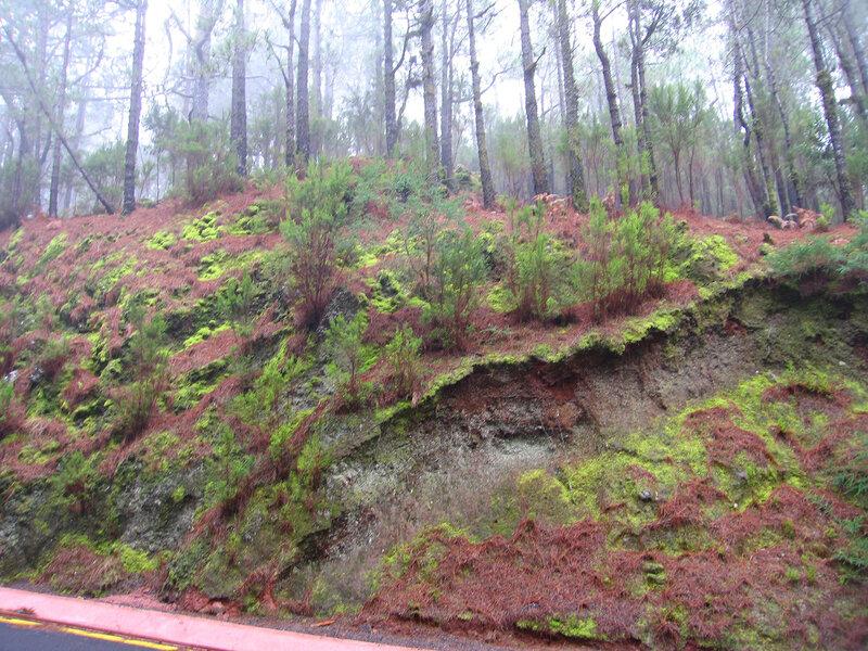 Тенерифе, леса Эсперансы