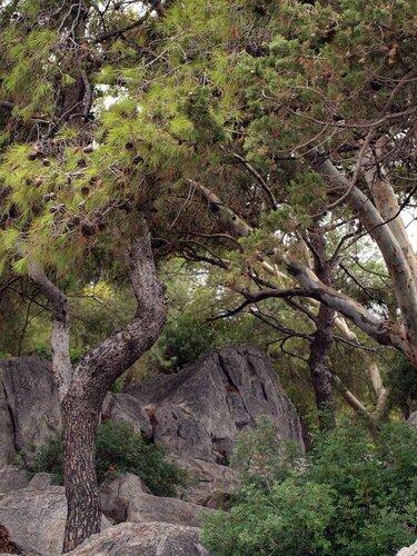 Парк в Метане