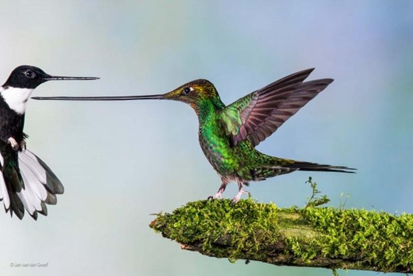 Победители конкурса фотографий дикой природы 0 12f89d 8da896db orig