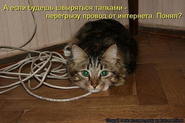 Очень тяжко приходилось...  Кошка сделана из меха, из желаний и загадки.  Кошка - это не собака, у неё свои повадки.