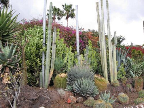 Тенерифе, кактусы в Джангл Парке