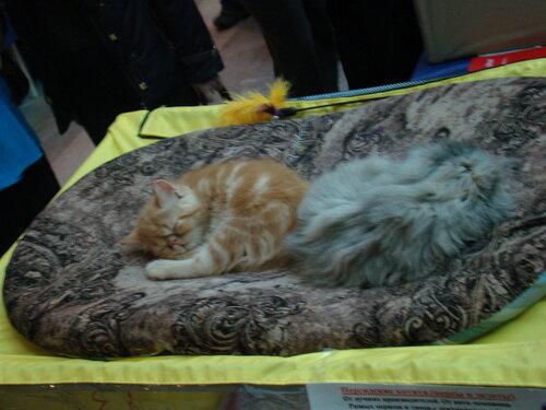 кошки устали