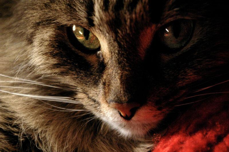 Очень серьёзная кошка