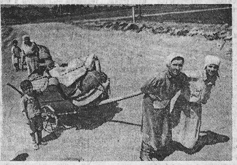 «Красная звезда», 9 мая 1943 года, как русские немцев били, потери немцев на Восточном фронте, красноармеец, Красная Армия, смерть немецким оккупантам, русский дух