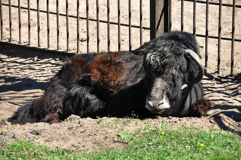 """""""В мире животных"""": фоторепортаж о Рижском зоопарке, много фото"""
