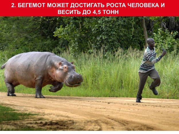 http://img-fotki.yandex.ru/get/3008/130422193.95/0_703d7_49d8c72d_orig