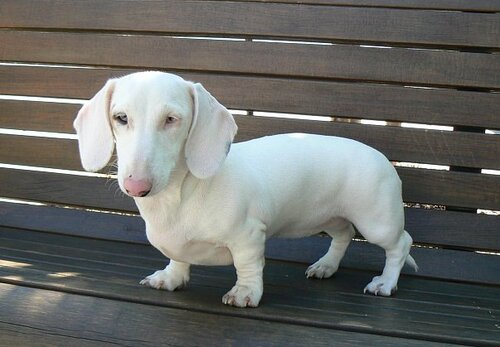 Необычные собаки - миксы пород и редкие окрасы 0_6e5c8_949acce8_L