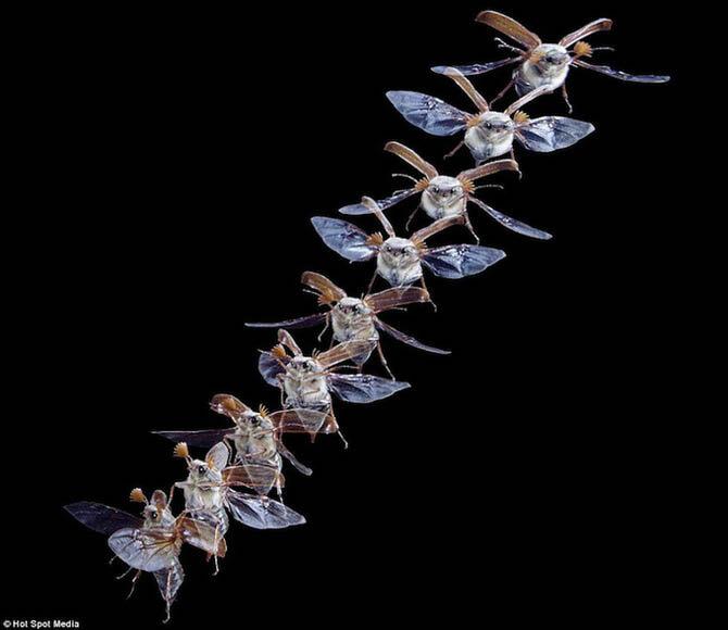 Животные в движении