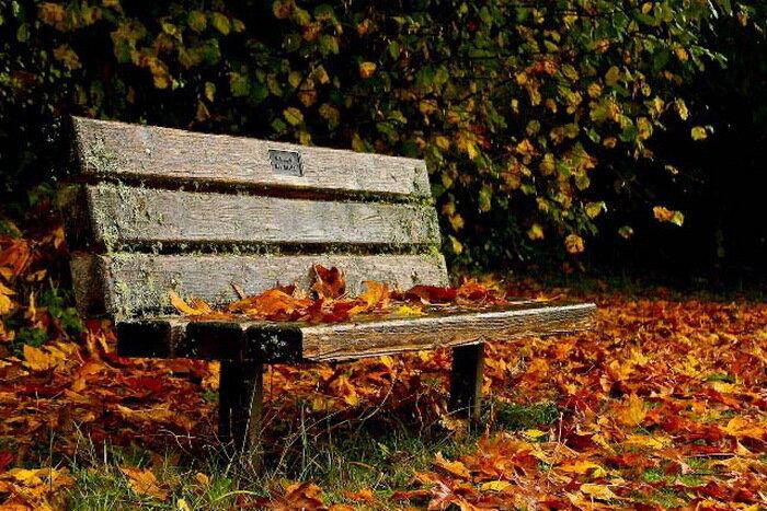 Вот и снова осень с рыжими кудрями