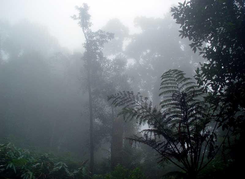 Тангкубан-Прау. Кратер Домас