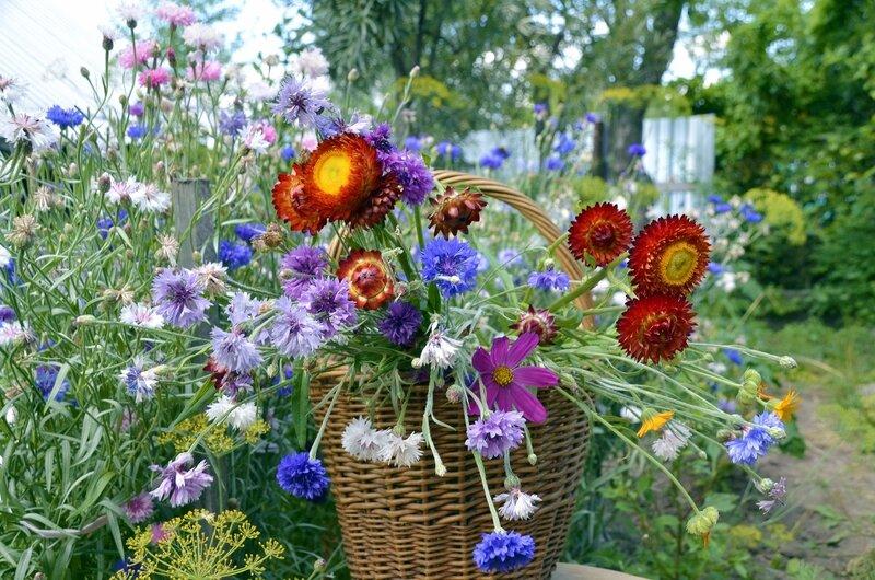 хороши  в саду цветочки...