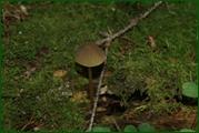 http://img-fotki.yandex.ru/get/30086/15842935.383/0_ead8f_31b82232_orig.jpg