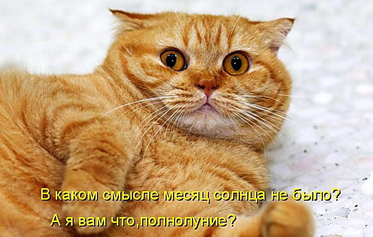 Смешные Животные Картинки с Надписью