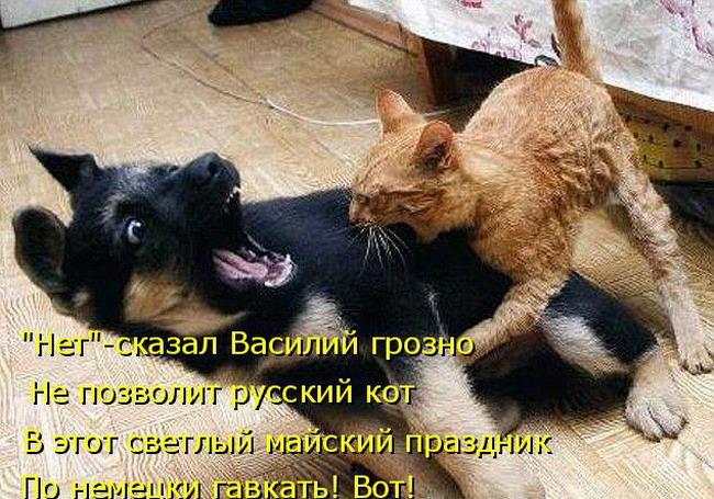Прикольные Животные Кошки