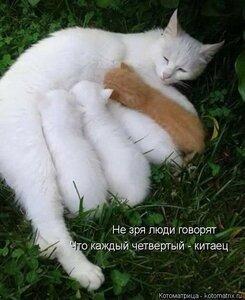 https://img-fotki.yandex.ru/get/30086/194408087.13/0_136b81_e763b2b1_M.jpg