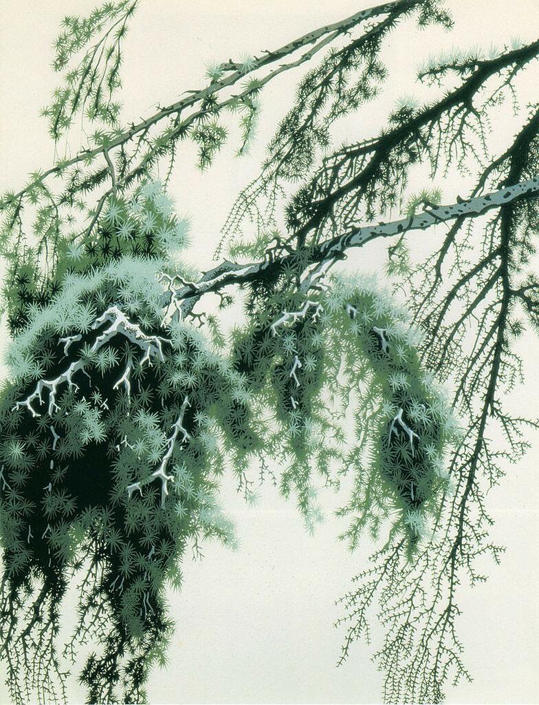 Pine Branch, 1951.jpg
